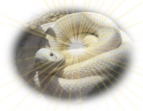 白蛇のパワー